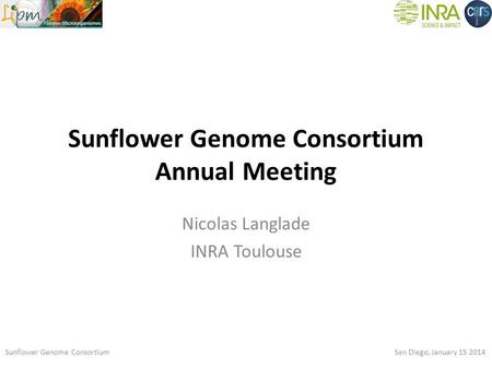 Sunflower Genome Consortium Annual Meeting Nicolas Langlade INRA Toulouse Sunflower Genome Consortium San Diego, January 15 2014.