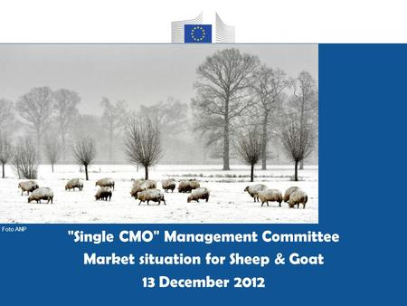 Group housing of pregnant sows as applicable from 1 January 2013 Single CMO Management Committee Market situation for Sheep & Goat 13 December 2012 Foto.