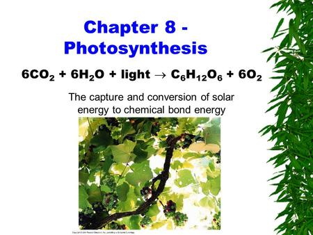 Chapter 8 - Photosynthesis 6CO 2 + 6H 2 O + light  C 6 H 12 O 6 + 6O 2 The capture and conversion of solar energy to chemical bond energy.