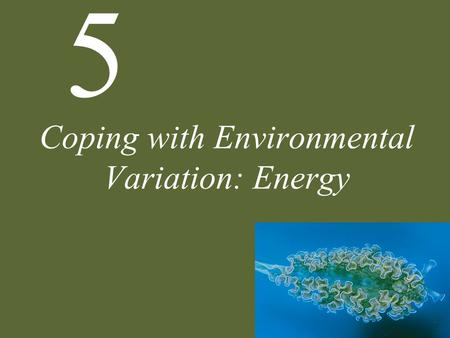 5 Coping with Environmental Variation: Energy. 5 Coping with Environmental Variation: Energy Sources of Energy Autotrophy Photosynthetic Pathways Heterotrophy.
