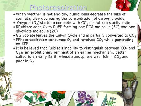 Photorespiration When weather is hot and dry, guard cells decrease the size of stomata, also decreasing the concentration of carbon dioxide. Oxygen (O2)