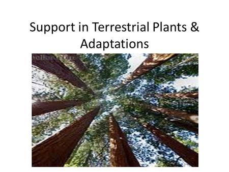 Support in Terrestrial Plants & Adaptations