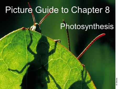 Picture Guide to Chapter 8 Photosynthesis. 8-1 Energy and Life.