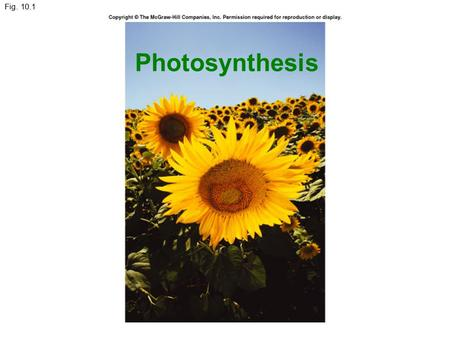 Fig. 10.1 Photosynthesis. 1. An Overview of Photosynthesis & Respiration 2. Autotrophs, photoautotrophs, and producers 3. Electromagnetic Spectrum & light.