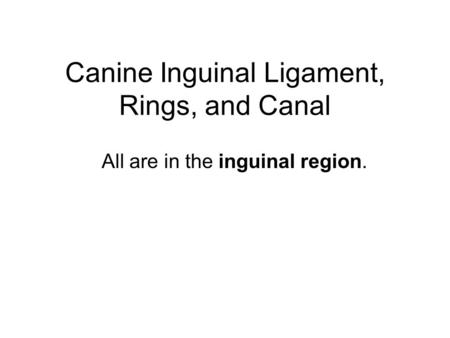 Canine Inguinal Ligament, Rings, and Canal All are in the inguinal region.