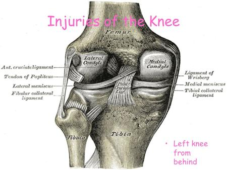 Injuries of the Knee Left knee from behind.