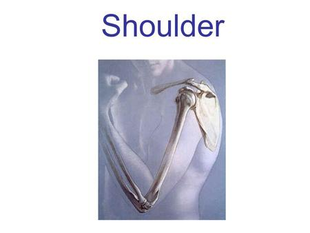 Shoulder. A.A.A. Contest Answer the Animated AnimaLS  Throughout the slide show there will be slides with written questions.  When you see a question,
