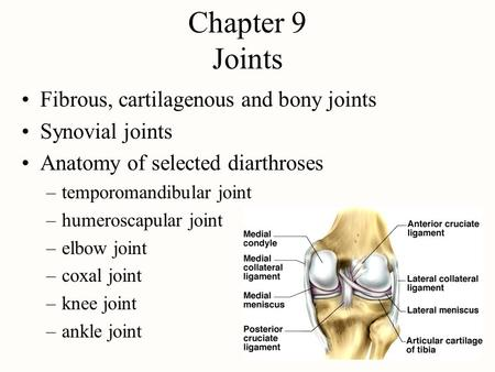 Chapter 9 Joints Fibrous, cartilagenous and bony joints Synovial joints Anatomy of selected diarthroses –temporomandibular joint –humeroscapular joint.