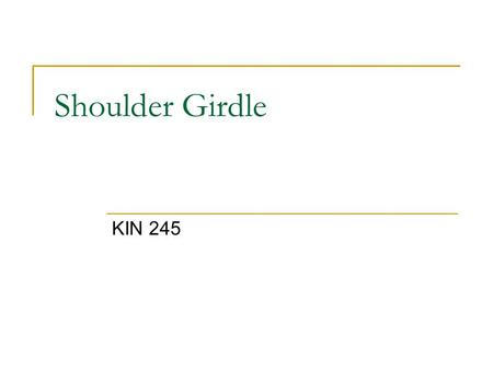 Shoulder Girdle KIN 245. Bones of the Shoulder Girdle Scapula (shoulder) Clavicle (small key) Link to Axial skeleton via sternoclavicular joint (an anterior.