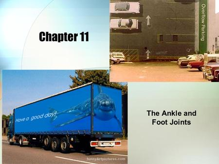 Chapter 11 The Ankle and Foot Joints. Bones of the Foot Tarsals Head Shaft Base Metatarsals Distal Middle ProximalPhalanges Calcaneus Talus Navicular.