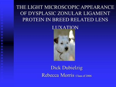 THE LIGHT MICROSCOPIC APPEARANCE OF DYSPLASIC ZONULAR LIGAMENT PROTEIN IN BREED RELATED LENS LUXATION Dick Dubielzig Rebecca Morris Class of 2006.