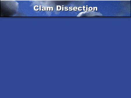 Clam Dissection. Dissection Clam 1.Foot 2.Mantle 3.Umbo of the shell 4.Anterior adductor muscle 5.Omit 6.Esophagus 7.Stomach 8.Digestive gland 9.Intestine.