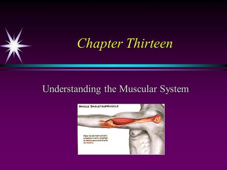 Chapter Thirteen Understanding the Muscular System.