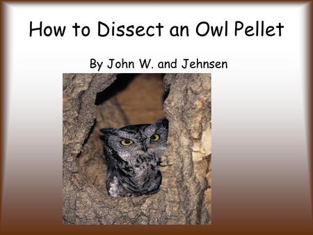 How to Dissect an Owl Pellet By John W. and Jehnsen.