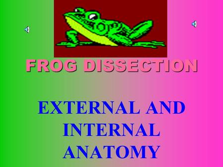 FROG DISSECTION EXTERNAL AND INTERNAL ANATOMY EXTERNAL ANATOMY Notice how thin the Skin is. Locate the external Nares or nostrils Locate the Eyes and.