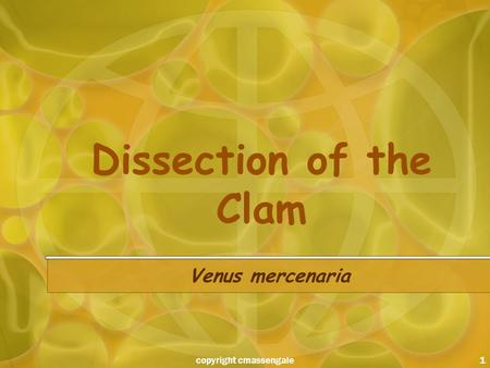 1 Dissection of the Clam Venus mercenaria copyright cmassengale.