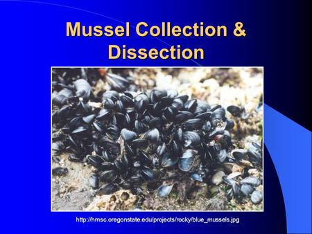 Mussel Collection & Dissection