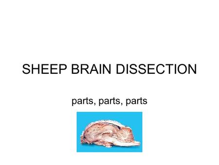 SHEEP BRAIN DISSECTION parts, parts, parts. cerebral cortex Sheep brains have parts comparable to human brains. Notice the two hemispheres. Identify.