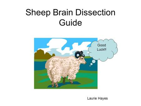 Sheep Brain Dissection Guide Good Luck!! Laurie Hayes.