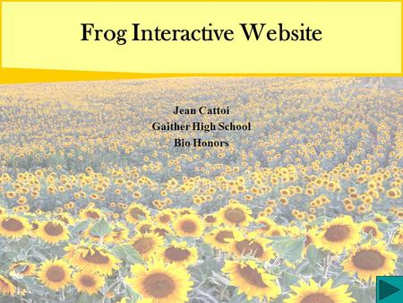 Frog Interactive Website