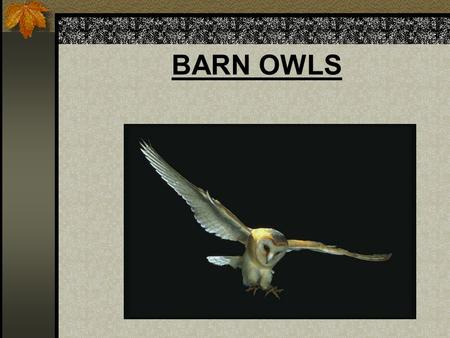 BARN OWLS. Critical Thinking You are a wildlife biologist. A group of farmers has come to you for help. The owl population in the area has increased significantly.