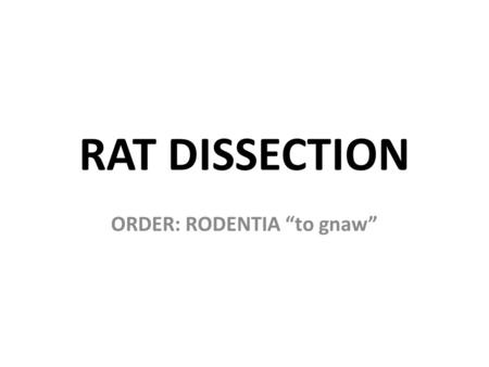 "ORDER: RODENTIA ""to gnaw"""