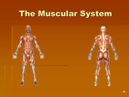 The Muscular System Muscle System Functions  Provides voluntary movement of body  Enables breathing, blinking, and smiling  Allows you to hop, skip,