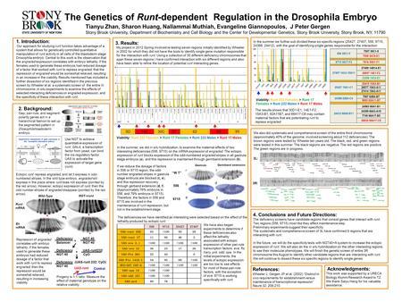 zebrafish in genome research ppt video online download. Black Bedroom Furniture Sets. Home Design Ideas