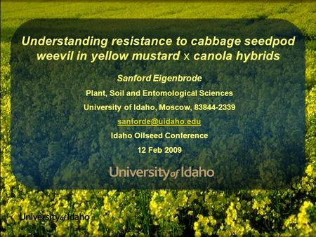 Understanding resistance to cabbage seedpod weevil in yellow mustard x canola hybrids Sanford Eigenbrode Plant, Soil and Entomological Sciences University.