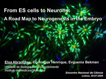 From ES cells to Neurons: A Road Map to Neurogenesis in the Embryo Elsa Abranches, Domingos Henrique, Evguenia Bekman Unidade de Biologia do Desenvolvimento.