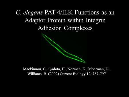 C. elegans PAT-4/ILK Functions as an Adaptor Protein within Integrin Adhesion Complexes Mackinnon, C., Qadota, H., Norman, K., Moerman, D., Williams, B.