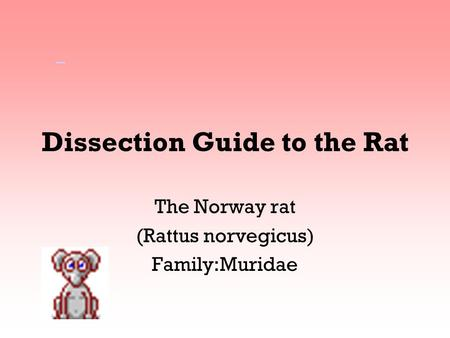 Dissection Guide to the Rat The Norway rat (Rattus norvegicus) Family:Muridae.