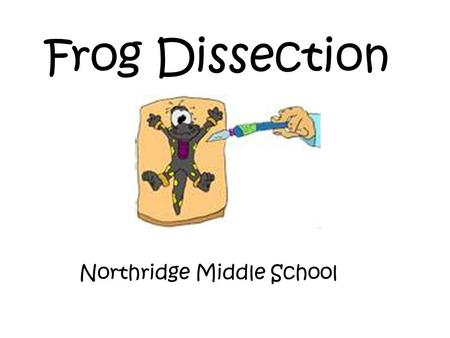 Frog Dissection Northridge Middle School. External Anatomy Verify that your frog has both a nictitating membrane (S) and a tympanic membrane (T). The.