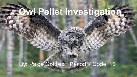 Owl Pellet Investigation By: Paige Gottlieb Period 7 Code: 12.