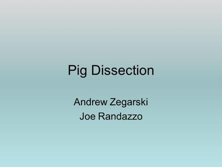 Pig Dissection Andrew Zegarski Joe Randazzo. Set up dissection table with paper towels, a tray to dissect the pig in, gloves, the fetal pig, and your.