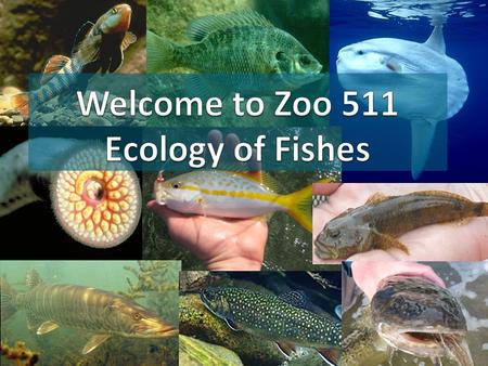 Today's outline Introductions Review syllabus Expectations and goals Lecture – Fish Anatomy Lab – fish dissections Walleye Bluegill.