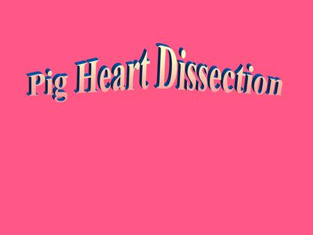 Pig Heart Dissection.