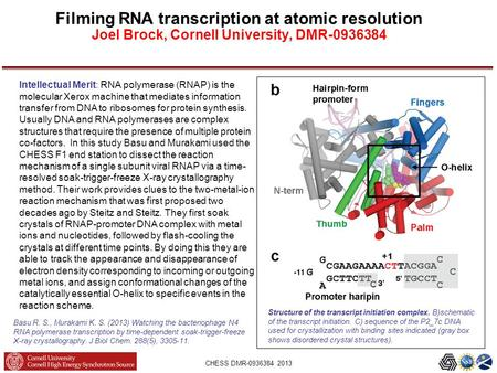 CHESS DMR-0936384 2013 Filming RNA transcription at atomic resolution Joel Brock, Cornell University, DMR-0936384 Structure of the transcript initiation.