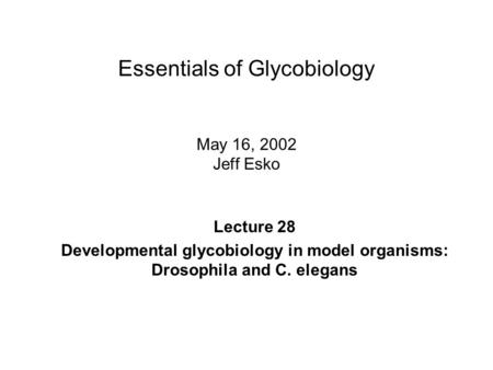 Essentials of Glycobiology May 16, 2002 Jeff Esko Lecture 28 Developmental glycobiology in model organisms: Drosophila and C. elegans.