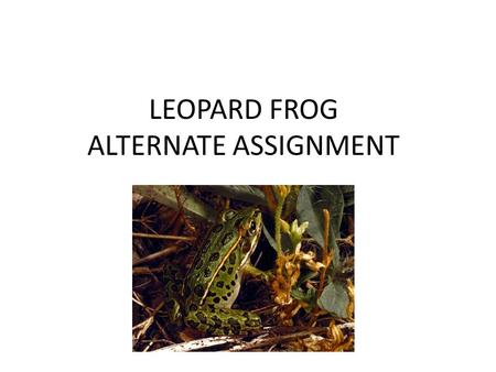 LEOPARD FROG ALTERNATE ASSIGNMENT