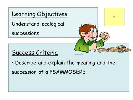 Learning Objectives Understand ecological successions Success Criteria Describe and explain the meaning and the succession of a PSAMMOSERE 1.