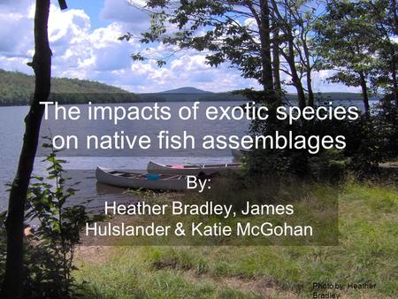 The impacts of exotic species on native fish assemblages By: Heather Bradley, James Hulslander & Katie McGohan Photo by: Heather Bradley.