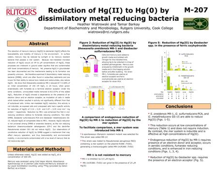 Reduction of Hg(II) to Hg(0) by dissimilatory metal reducing bacteria Heather Wiatrowski and Tamar Barkay Department of Biochemistry and Microbiology,