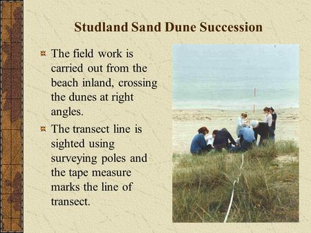 Studland Sand Dune Succession The field work is carried out from the beach inland, crossing the dunes at right angles. The transect line is sighted using.
