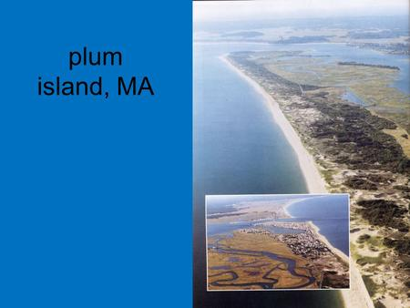 Plum island, MA. developed -- streets and houseswildlife refuge no dunes (removed, or built upon)sand dunes a few beach grasses (between.