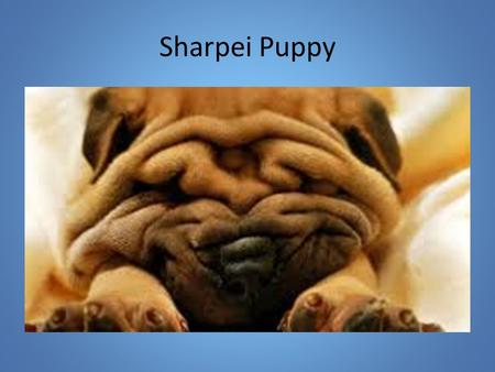 Sharpei Puppy. The Nature of Science Science may be described as the attempt to give good accounts of the patterns in nature. The result of scientific.