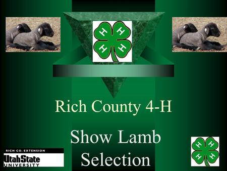 Rich County 4-H Show Lamb Selection Darrell Rothlisberger Rich County Extension Agent.