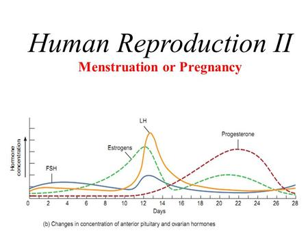 1 Menstruation or Pregnancy Human Reproduction II.