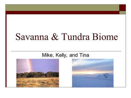 Savanna & Tundra Biome Mike, Kelly, and Tina. Savanna Biome  It occurs in regions that has a distinct wet/dry climate category.  Dry season in the winter.