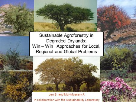 Sustainable Agroforestry in Degraded Drylands: Win – Win Approaches for Local, Regional and Global Problems Leu S. and Mor-Mussery A. in collaboration.